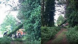 Doğa Harikası Ağaçları Kestiler