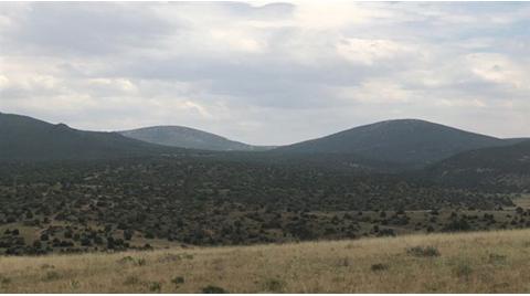 Eskişehir'de 31 Bin Hektarlık Alanda Ağaçlar Kesilecek