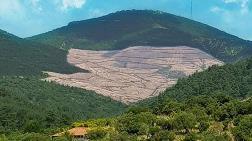 "TEMA Vakfı: ""Ağaç Tanımı"" Mevzuatta Açık, En Az 195.000 Ağaç Kesildi"