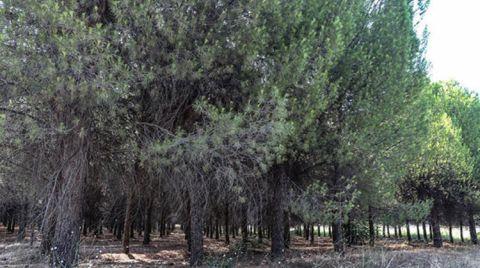 Kütahya'da Ormanlara Giriş için İzin Gerekecek