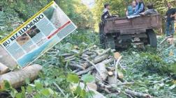 Şahin Dağları'nda Ağaç Katliamı