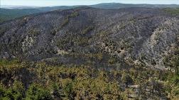 Yanan Ormanlık Alanlar Yeniden Yeşeriyor