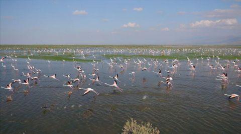 Rehabilite Edilen Gölet Eski Günlerine Dönüyor
