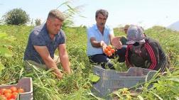 Kentsel Dönüşüm - JES ve Siyanür Tarım Arazilerini Vuruyor