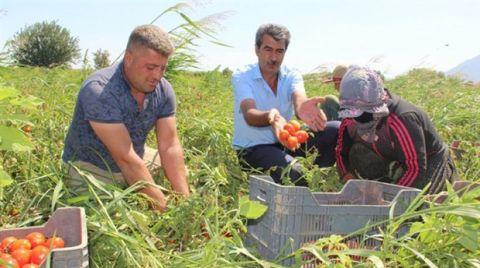 JES ve Siyanür Tarım Arazilerini Vuruyor