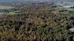 5 Bin Köye 5 Bin Orman Projesi'nde Sona Gelindi
