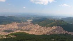 Ormanların Talanı için Kanunlar Yok Sayılıyor