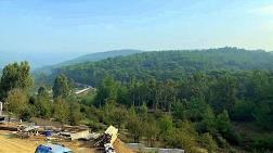 Muğla'da Yüz Binlerce Ağaç Kesilebilir