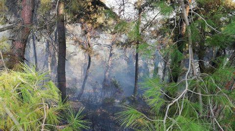 Kadirli'deki Orman Yangınında 6 Hektarlık Alan Zarar Gördü