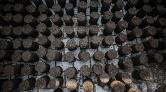 Gazze'de Zeytin Çekirdeğinden Yakıt Üretiliyor