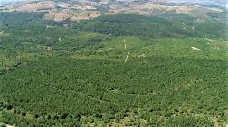 Kastamonu Entegre'den 50. Yıl Hatıra Ormanı