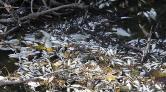 Bursa'da Yine Çevre Kirliliği