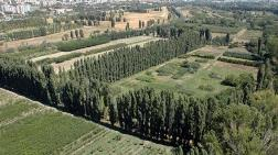 Atatürk Orman Çiftliği'nde Tohum Üretilecek