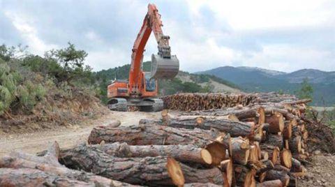 Ağaçlandırma Seferberliği Ormanları Kurtarır mı?