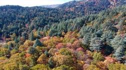 """Kasnak Meşesi Ormanı """"Kesin Korunacak Hassas Alan"""" Oldu"""
