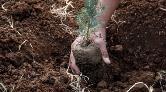 11 Milyon Fidan Kampanyasına Ormancılardan Tepki