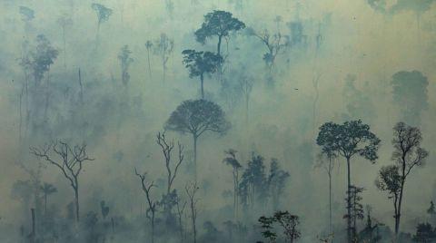 Amazonlardaki Ormansızlaşma En Yüksek Seviyesinde