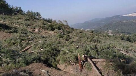 Kaz Dağları'nda Ağaçlar Kesilmeye Devam Ediyor
