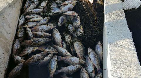 Çaydaki Balık Ölümleri Tedirgin Etti