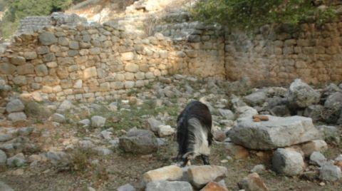Keçi Otlatırken Tarihi Hamam ve Kilise Kalıntıları Buldu