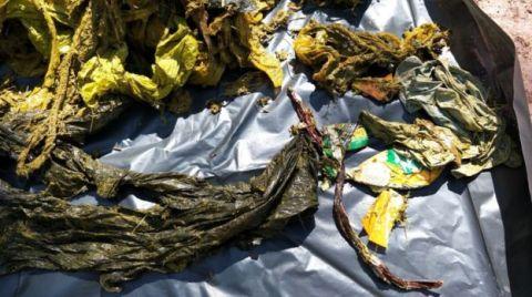 Tayland'da Ölü Bulunan Geyiğin Midesinden 7 Kilo Çöp Çıktı