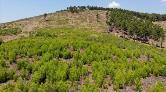 Sezen Aksu'dan Meral Okay Anısına Hatıra Ormanı