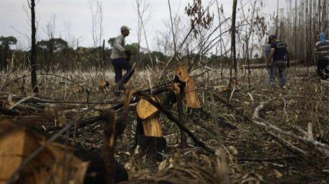 Ağaç Kesimi 17 Yılda 5 Kat Arttı