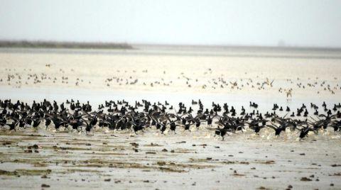 UNESCO için Kuş Cennetinin Biyoçeşitliliği Çıkarılıyor