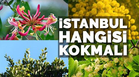 İstanbul'un Kokusu Ne Olmalı?