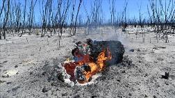 Türk Ormancıları Avustralya'daki Yangınların Söndürülmesine Katkı Sağlayabilir