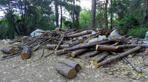 Ağaç Katliamı Davasına Orman Müdürlüğü Katılmadı