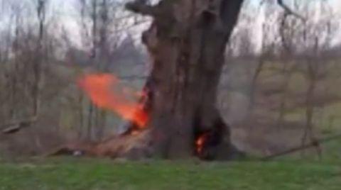 400 Yıllık Çınar Ağacını Yaktılar