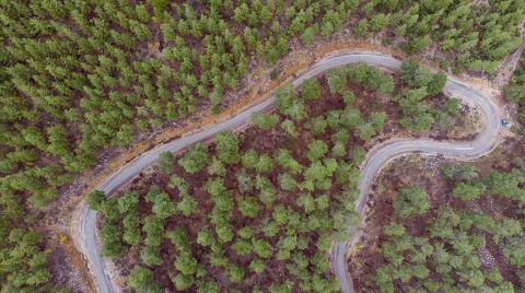 Akdeniz Ormanları Projesi Dünyada İlk 5'te