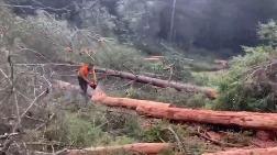 Muğla'da Ağaç Kesimi Başladı