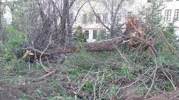 Saraçoğlu'nda Ağaç Katliamı Yapıldı