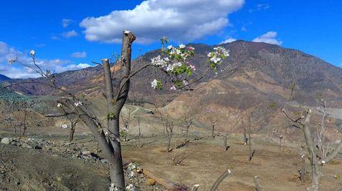 Yusufeli'nin Yeni Yerleşkesinde Ağaçlandırma Çalışması