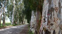 Aşıklar Yolu'ndaki Ağaçları Yazı Tahtasına Çevirdiler