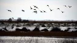 Kızılırmak Deltası, Kesin Korunacak Hassas Alan İlan Edildi