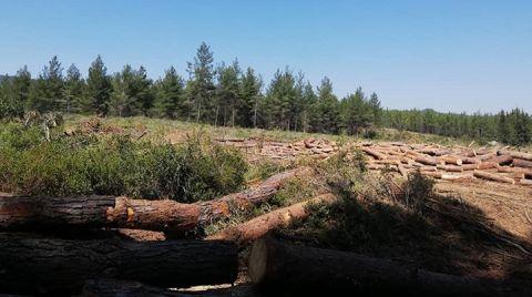 Milas'ta Orman Katliamı