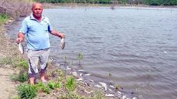 Çokal Barajı'nda Balık Ölümleri