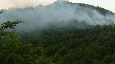 Ordu'daki Orman Yangını Sabotaj mı?