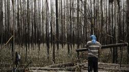 Salgın Döneminde Orman Katliamı Yüzde 150 Arttı