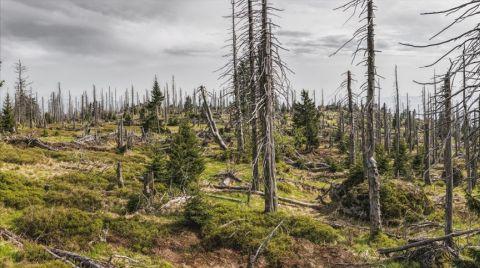 Kuraklık Nedeniyle Her Yıl 5,2 Milyon Hektar Orman Azalıyor