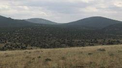 200 Bin Ağacın Kaderini Belirleyecek Keşif Yine İptal