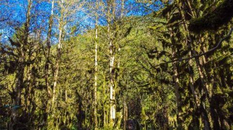 Ormanlar Tehdit Altında