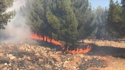 Şanlıurfa'daki Orman Yangınında 45 Hektar Alan Zarar Gördü