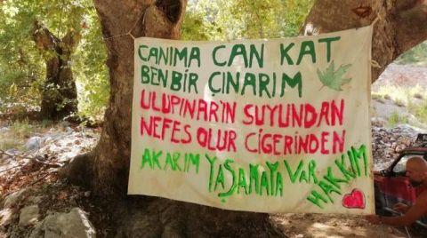 Asırlık Ağaçlar için Nöbet Çağrısı