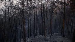 Adana'daki Yangınında Zarar Gören Alan Ağaçlandırılacak