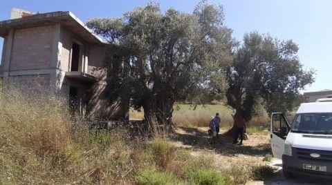 Tarihi Ağacın Yanına Yapılan Villa Yıkıldı