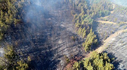 Pozantı'daki Orman Yangınında Terör Şüphesi